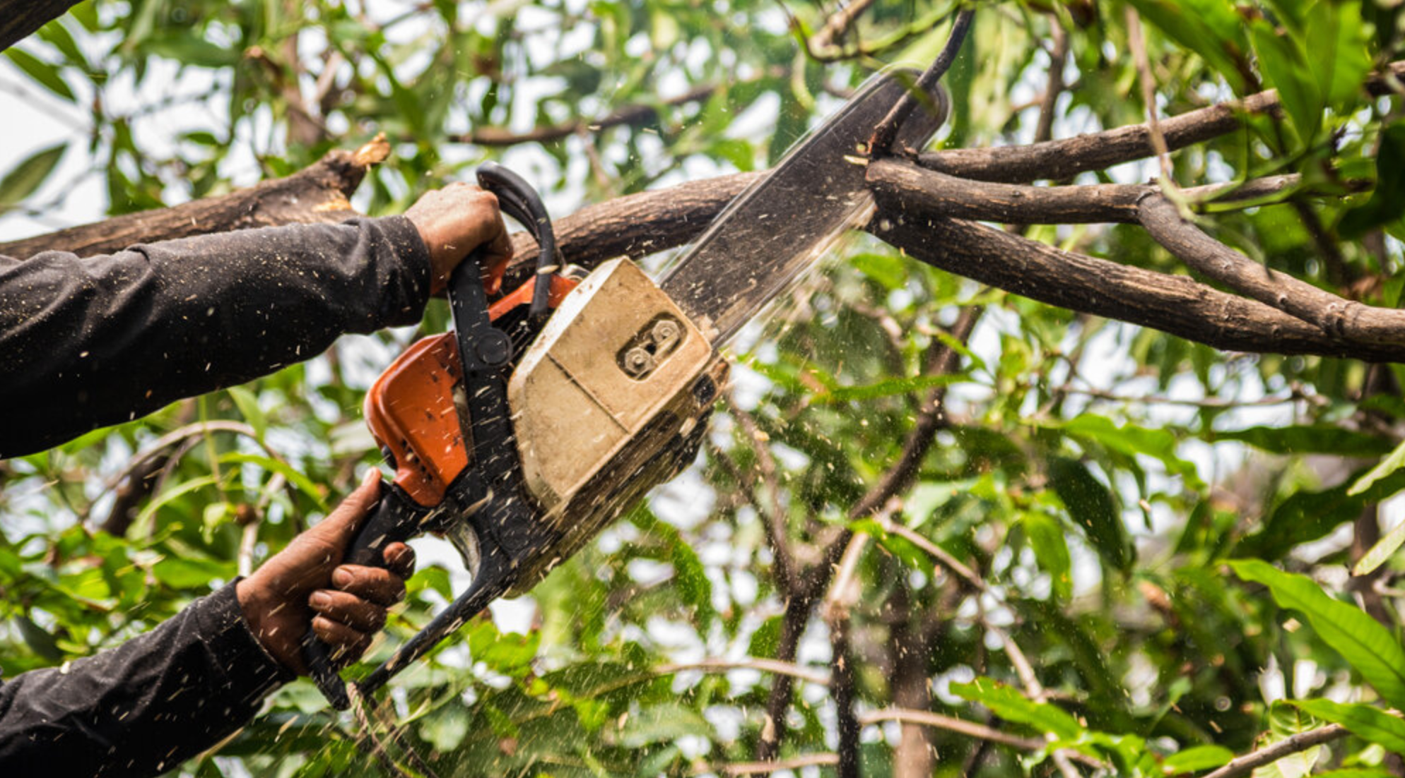 Is Your Home In Need of Tree Trimming in St Pete