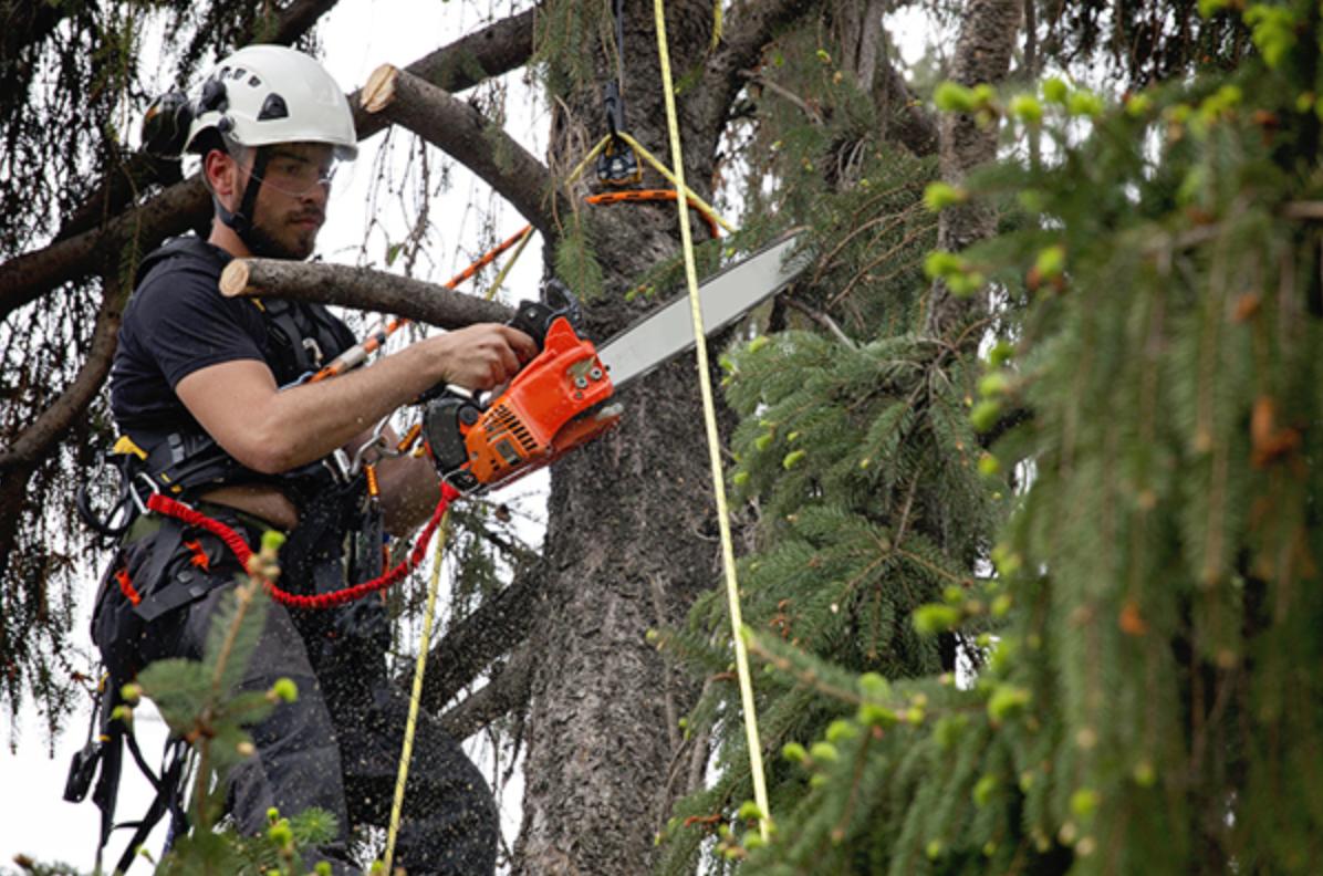 Top Stump And Tree Service St Petersburg Fl