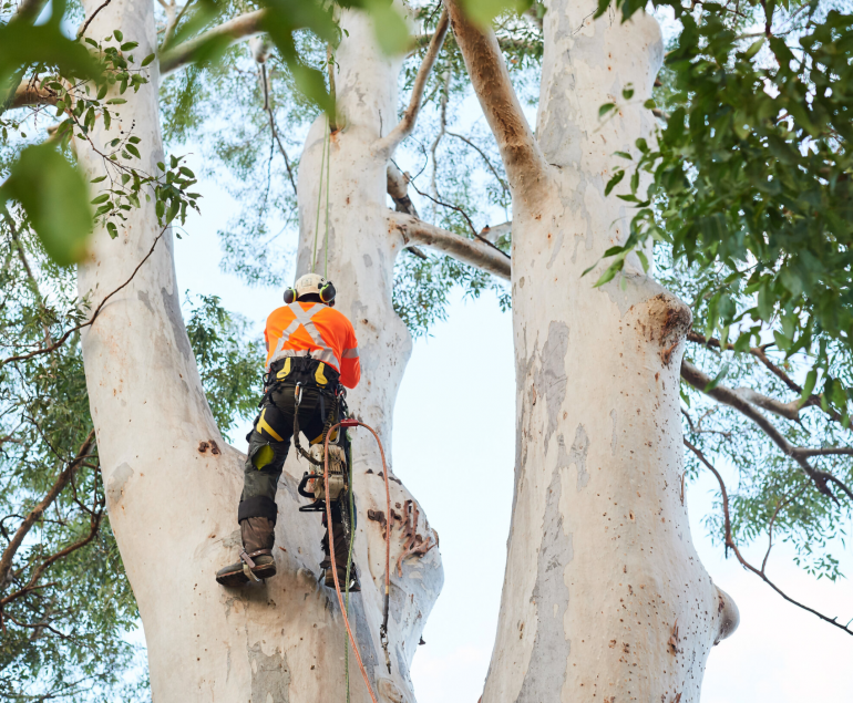 Tote's Tree Trimming Service In Palm Harbor