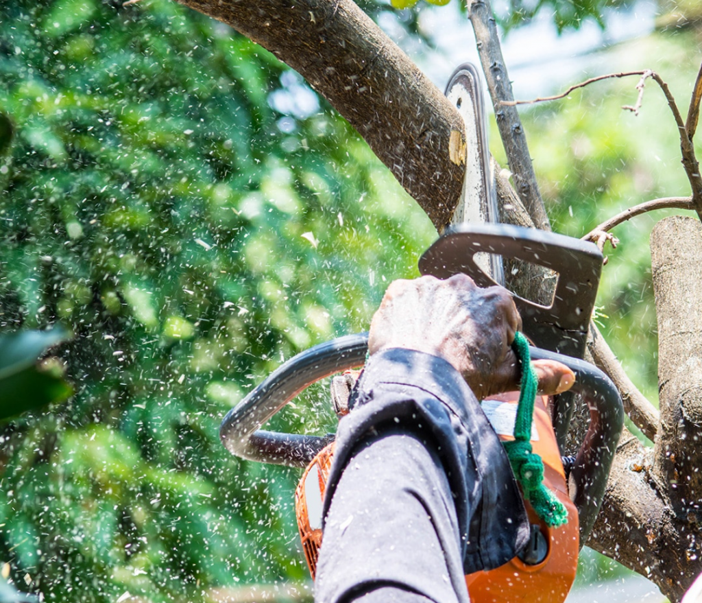 Palm Harbor FL Tree Trimming